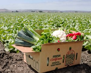 Fresh vegetables in a corrugated box in the field.